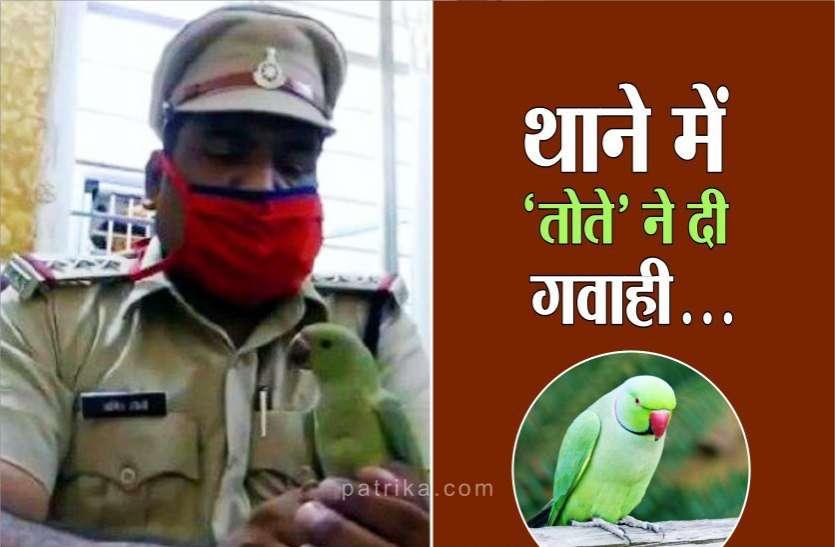 इस 'तोते' ने पिंजरे से फरार होकर दो परिवारों में करा दी जंग, पुलिस ने थाने में बुलाया 'तोता'