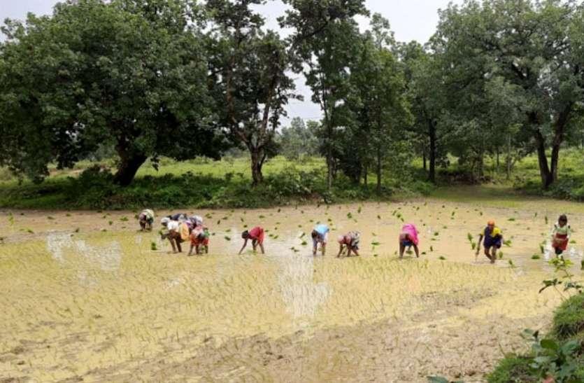 फुलवारी फाइन धान की खेती से हुई समृद्धि, अब दूसरों को दे रही रोजगार