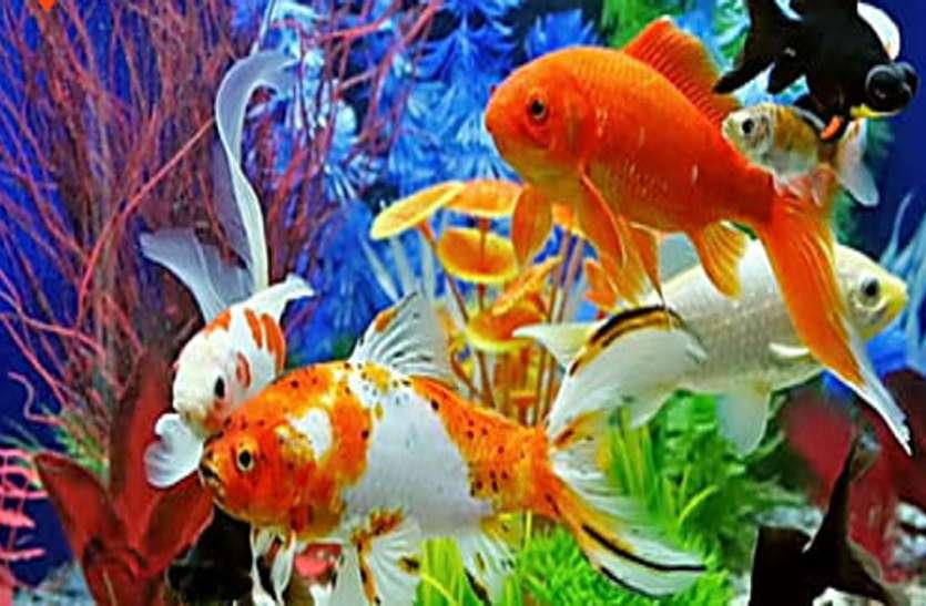 अब आप भी ले सकते है कृषि विश्वविद्यालय में रंगीन मछली फार्मिंग की ट्रेनिंग