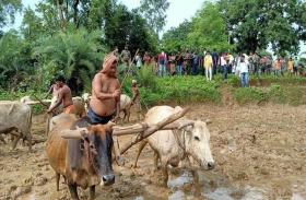 जब मंत्री बने किसान, खेत में हल चलाकर रोपा धान, बोले- समझता हूं किसानों का दर्द