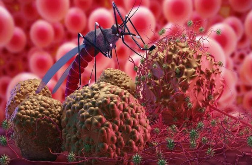Malaria: इन दिनों मलेरिया से रहें सावधान, जानें इसकी अवस्थाओं और इलाज के बारे में