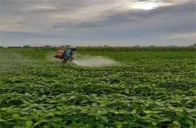 बारिश होने के बाद फसलों में दवाओं का छिड़काव किया शुरू