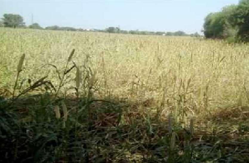 बारिश न होने से सूखने लगीं फसलें, किसान परेशान