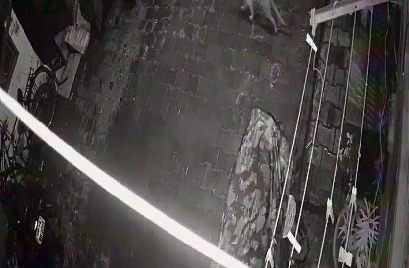 गाजियाबाद की पॉश कालाेनी में आधी रात काे घूमते हुए देखा गया तेंदुआ, दहशत में लाेग