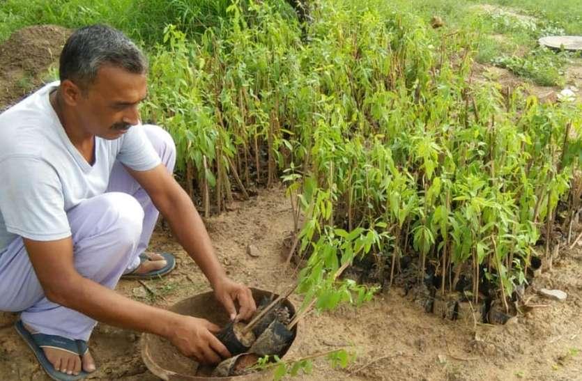 करौली में पुलिस को चुनौती दे रहे चंदन चोर, हिण्डौन के किसानों की बढ़ा रहे चिंता