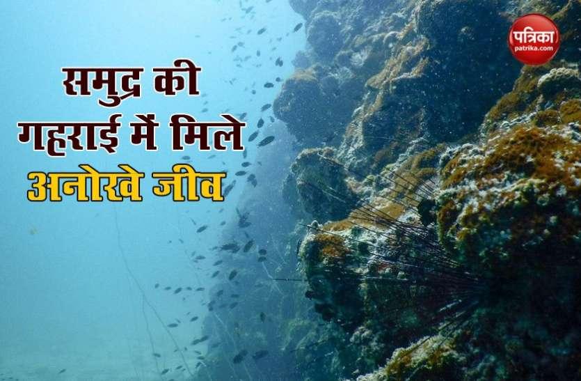 समुद्र की गहराई में मिला एक हजार करोड़ साल पुराना जीव, वैज्ञानिकों ने इसे दोबारा किया जिंदा