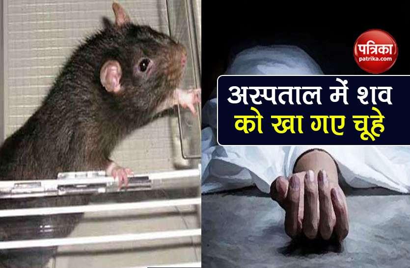 अस्पताल में महिला के शव को कुतर-कुतर के खा गए चूहे, देखकर परिजनों के उड़े होश