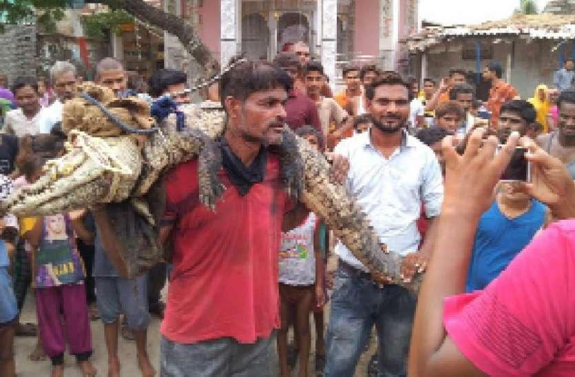 ग्रामीणों ने मगरमच्छ को पकडकऱ वन विभाग को सौंपा