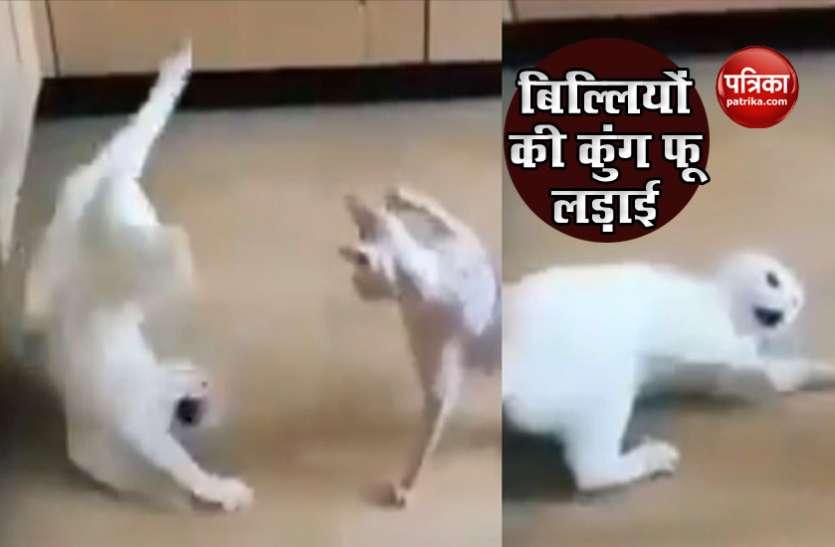 खाने को लेकर भिड़ गई दो बिल्ली करने लगी Kung Fu Fight, वीडियो हुआ वायरल