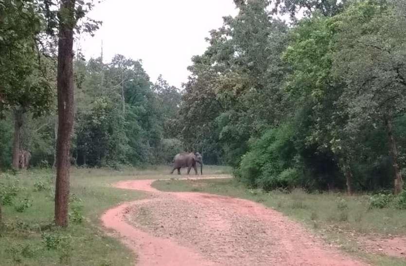 Elephants roaming inside the forest