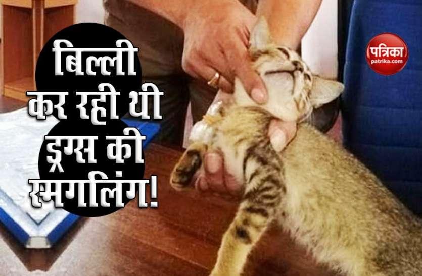 ड्रग्स की सप्लाई कर रही थी बिल्ली, पुलिस ने दबोचा तो चकमा देकर हुई फरार
