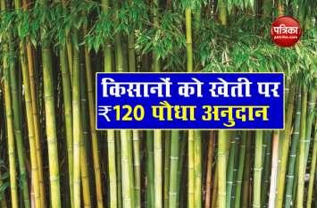 National Bamboo Mission : सरकार की इस योजना से किसानों को मिलेगा लाभ, 3 से 4 लाख का मिलेगा फायदा