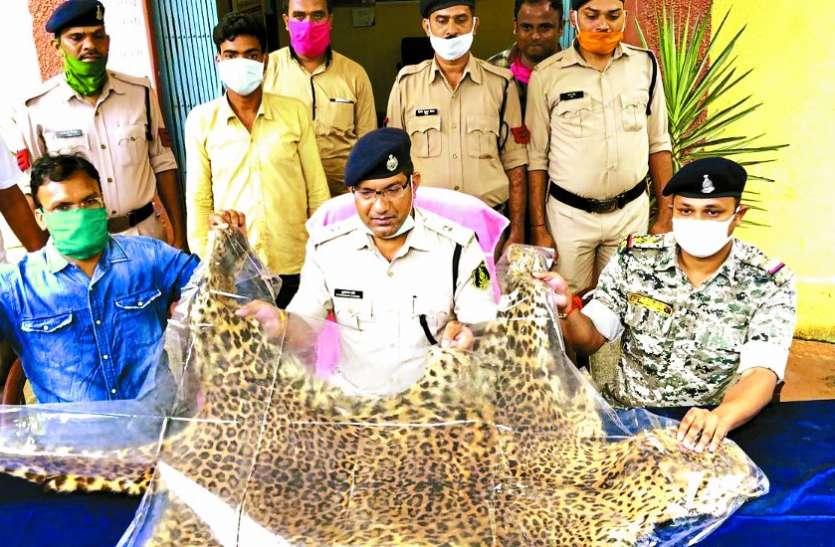 तेंदुए की खाल के साथ एक आरोपी गिरफ्तार