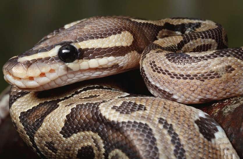 python_in_washing_machin01.jpg