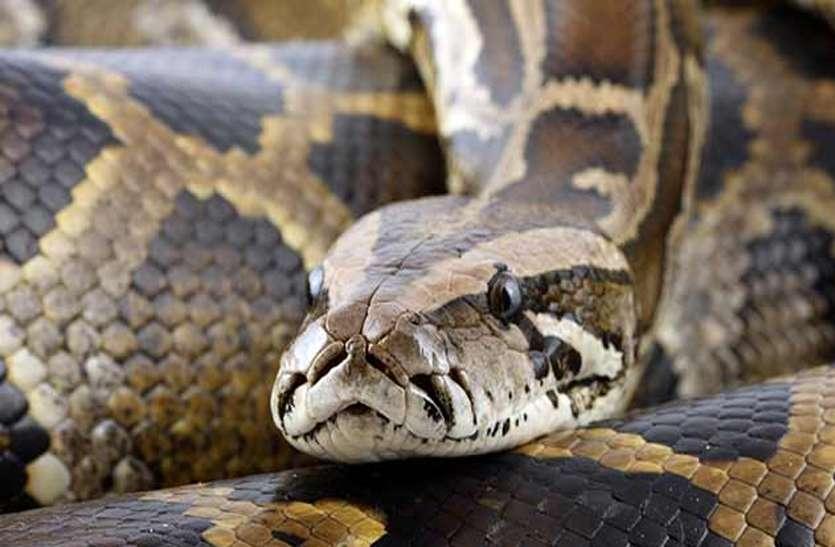 python_in_washing_machin02.jpg