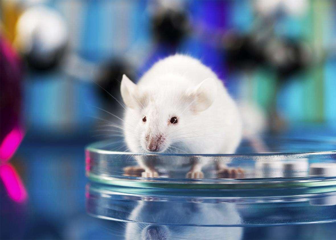 मानव निर्मित इंजीनियर्ड वायरस कोरोना से लडऩे में सक्षम, चूहों पर प्रयोग सफल