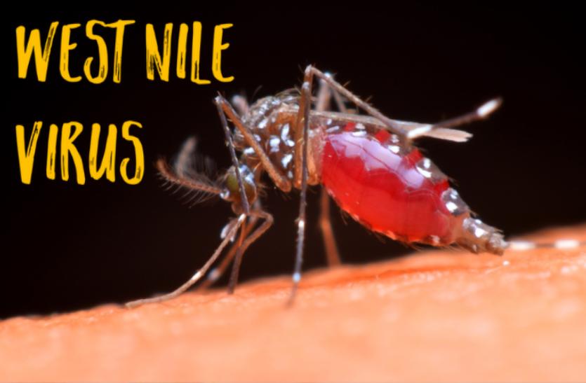 अब मच्छर जनित वेस्ट नील वायरस खतरा, पहली मौत हुई