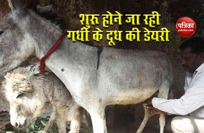देश में जल्द खुलेगी गधी के दूध की पहली Dairy, 1 लीटर के लिए देने होगें 7000 रुपये !