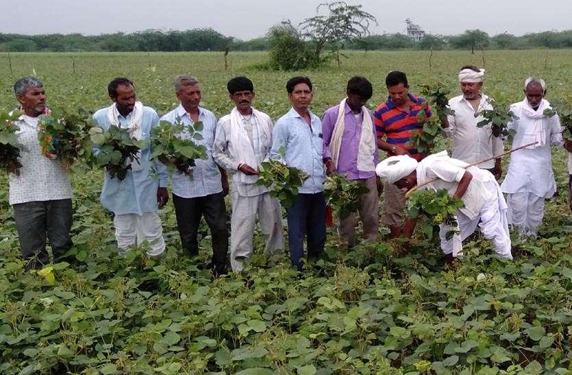रोग लगने से 1500 बीघा में मूंग की फसल चौपट, किसान को हुआ आर्थिक नुकसान