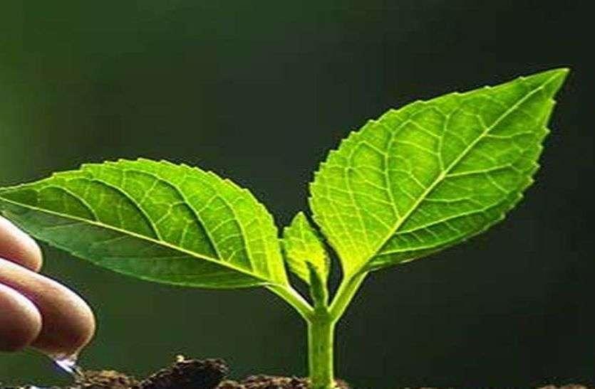 अधिकारी-कर्मचारियों की लापरवाही से 7.50 लाख पौधे नष्ट, अब ऑडिट