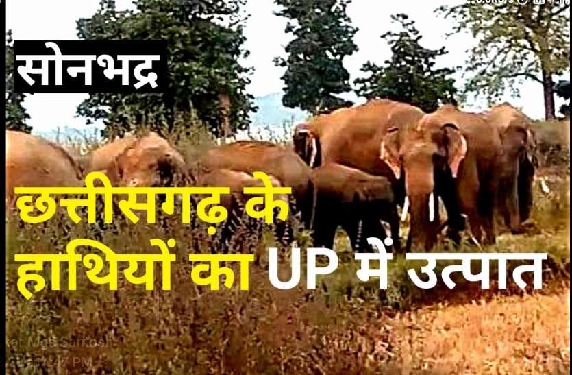 छत्तीसगढ़ के हाथियों का यूपी के सोनभद्र में उत्पात, दो घरों को को पहुंचाया नुकसान, दो घायल