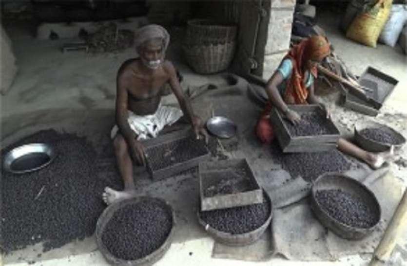 मखाना व्यापारी मालामाल, बेहाल मजदूर फंसे हैं कर्जे के मकडज़ाल में