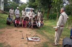 जंगल से भटक कर मक्के की बाड़ी में घुस आया सांभर, ग्रामीणों ने मारकर बांटा मांस, 12 गिरफ्तार