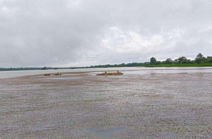 मूसलाधार बारिश के बाद धण्ड तालाब छलकने को आतुर , अब केवल 11 इंच खाली