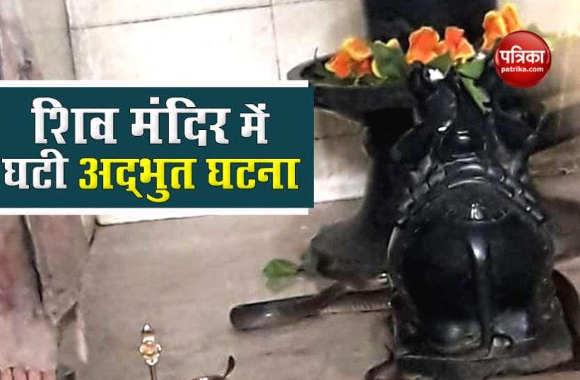 शिव मंदिर में चल रहा था महामृत्युंजय जाप, अचानक 6 फीट का काला सांप आकर शिवलिंग से लिपटा, लोगों ने कहा चमत्कार