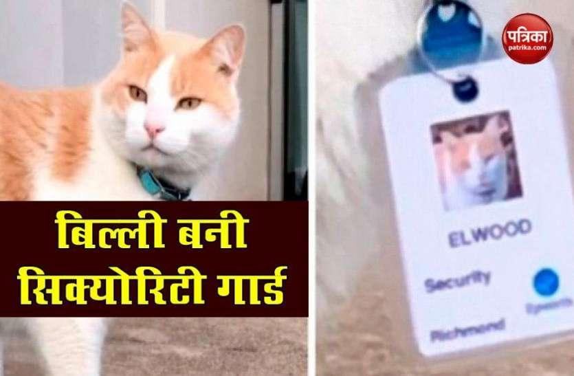 आवारा बिल्ली को अस्पताल ने दी Security guard की नौकरी, Main gate पर लगी है ड्यूटी