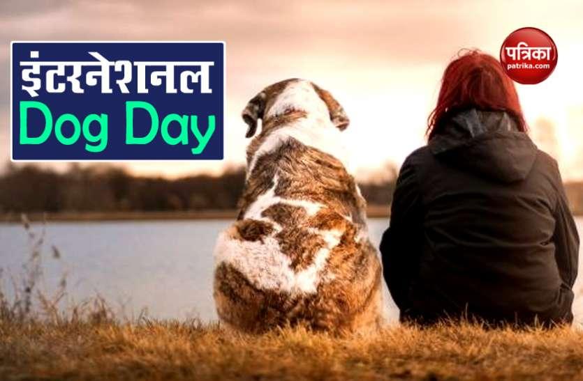 International Dog Day 2020: हार्ट और डायबिटीज जैसी बीमारियों के खतरे से भी दूर रखते हैं डॉग