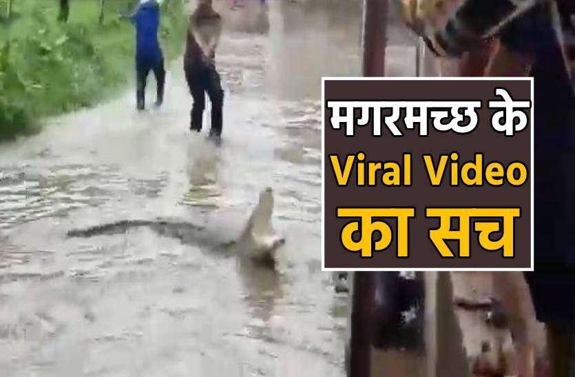 FACT CHECK- बाढ़ के साथ रहवासी इलाके में घुसा विशालकाय मगरमच्छ देखें वीडियो और जानिए सच