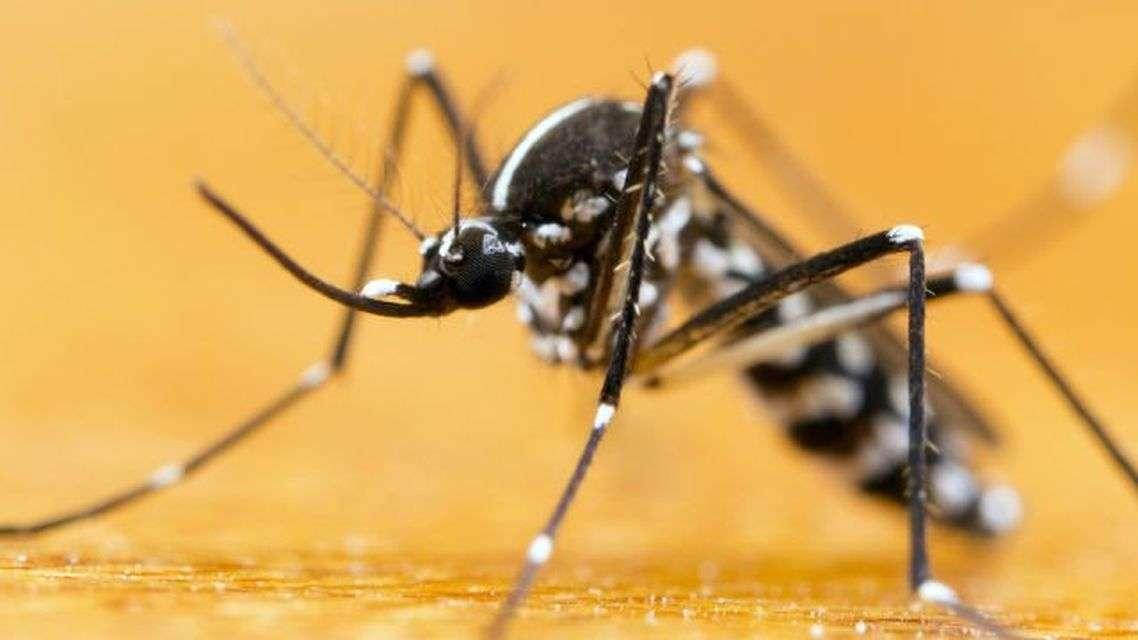 अनुवांशिक रूप से मानव द्वारा तैयार किए गए करोड़ों मच्छर लडेंग़े जीका वायरस से