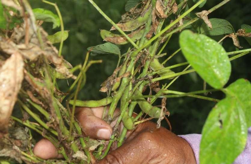 कोरोना काल में फ सल खराब, मुआवजे की आस में किसान