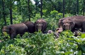 हाथियों का आतंक जारी, एक अद्धविक्षिप्त को कुचल कर मार डाला