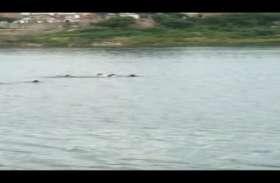 मुरादाबाद: दो युवतियां नदी में बहीं, NDRF की टीम खोजने में जुटी