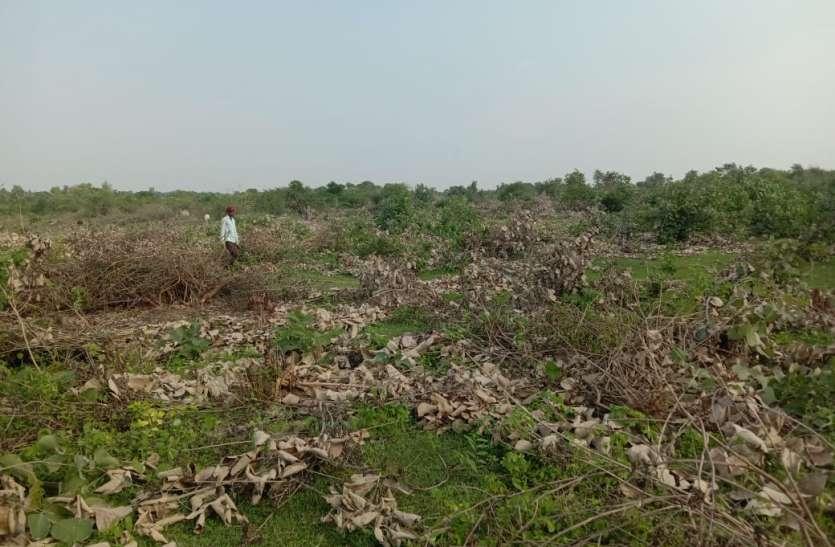 वनों की कटाई नहीं रोक पा रहे वन रेंजर, पट्टों की लालच में अधाधुंध की गई लाखों पेड़ पौधों की कटाई