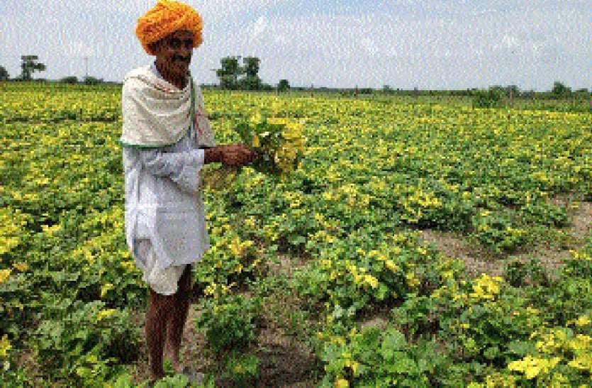 खरीफ की फसल में लगा रोग, किसान बोले खराबे का कराओ सर्वे