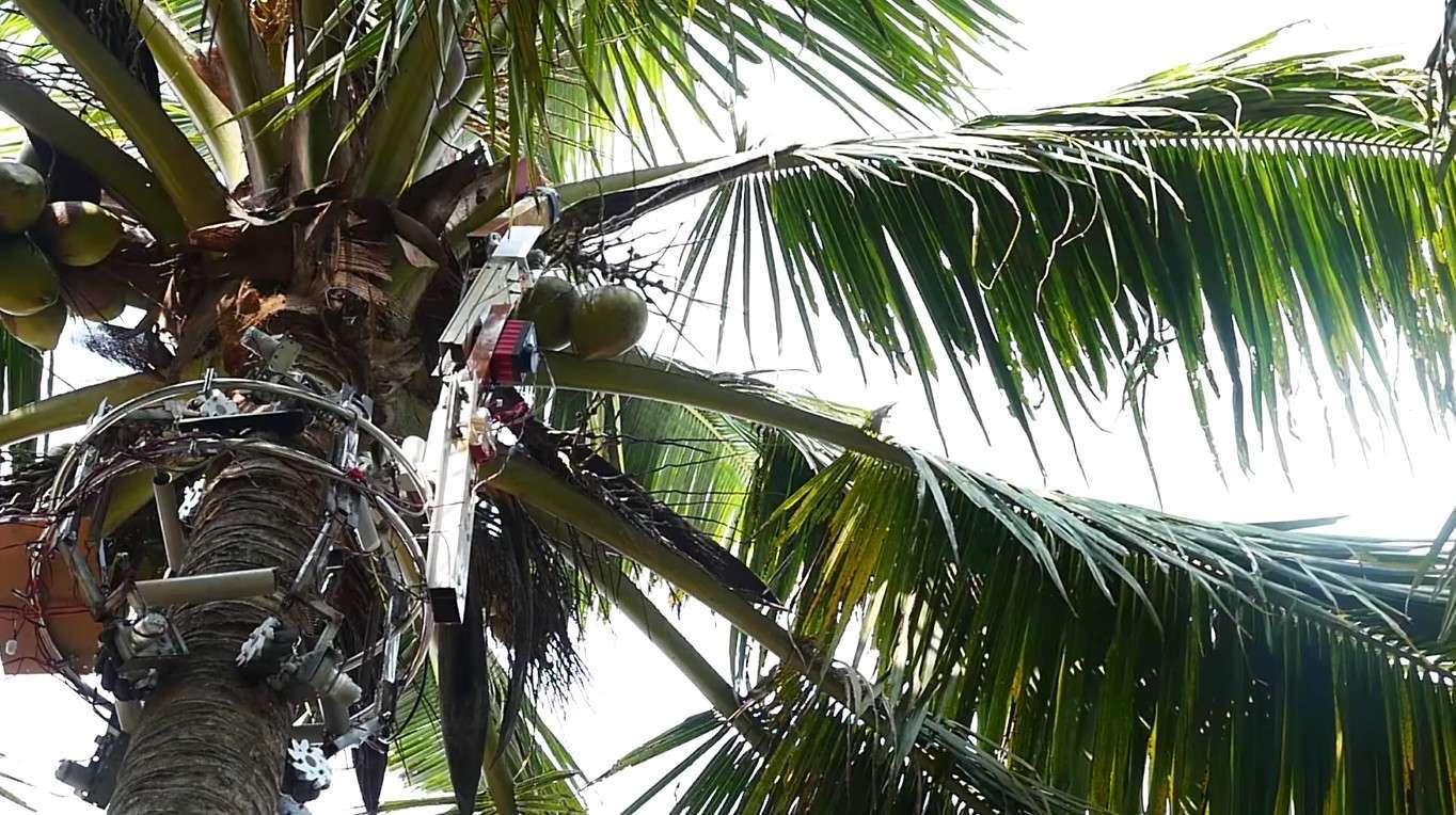 भारतीय छात्रों का बनाया ये रोबोट पेड़ों पर चढ़ सकता है