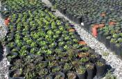 यहां बनने जा रहा है देश का पहला पौधों का क्वारंटाइन सेंटर, इसके पीछे है बड़ी वजह