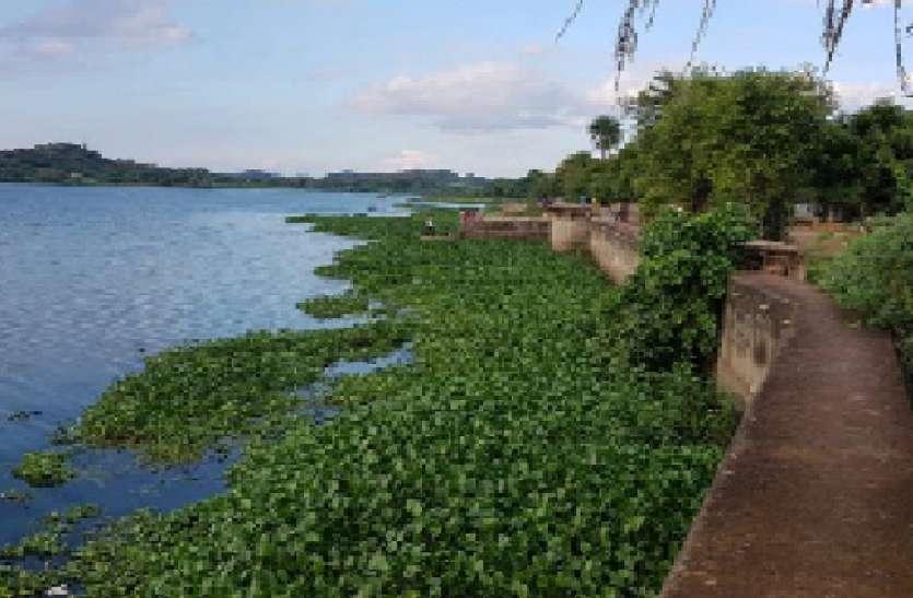 खरपतवार से अटी रामसागर झील