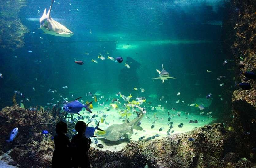 रायपुर में बनेगा प्रदेश का पहला मच्छलीघर, शॉर्क और ऑक्टोपस जैसे रखे जाएंगे समुद्री जीव