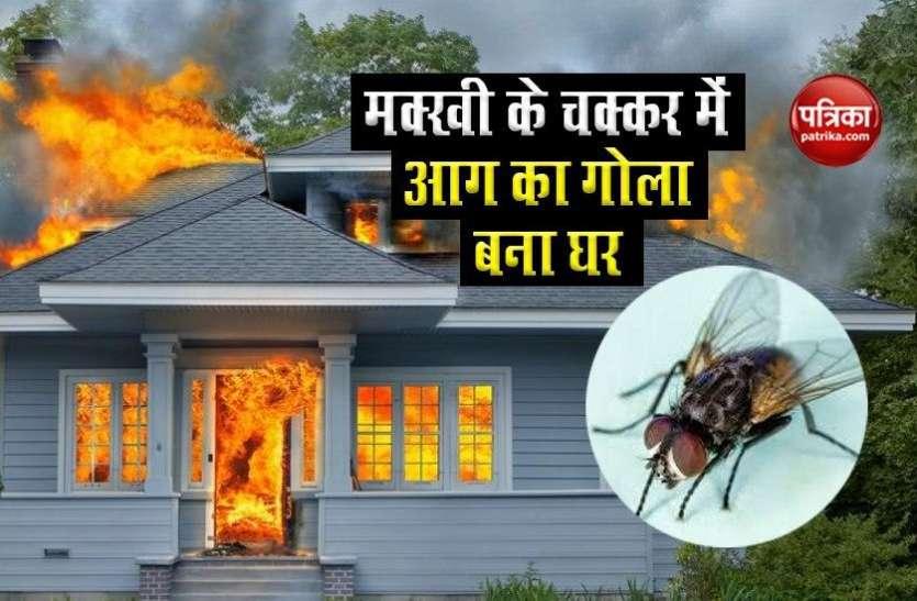 खाना खाते समय मक्खी के भिनभिनाने से परेशान हुआ शख्स, हवा में घुमाई रैकेट तो अचानक घर में हुआ धमाका