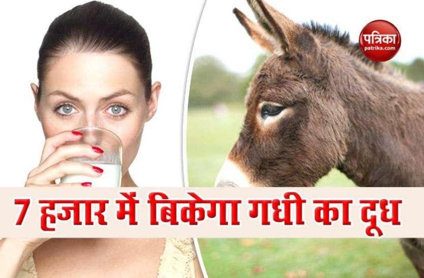 गधी के दूध में मौजूद एंटी एजिंग तत्व से बुढ़ापा रहता है कोसो दूर, 7 हजार रुपए लीटर है इसकी कीमत