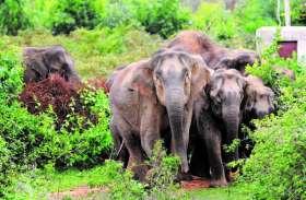 2 भालुओं ने युवक को मार डाला, इधर खदेड़े जाने से बिदके हाथी ने सूंड में लपेटकर युवक को पटका, हालत नाजुक