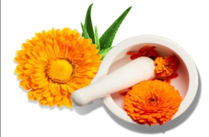 ये फूल दाद, दमा, खांसी, दांत,कान, आंख दर्द व बुखार में लाभकारी, ऐसे करें इस्तेमाल