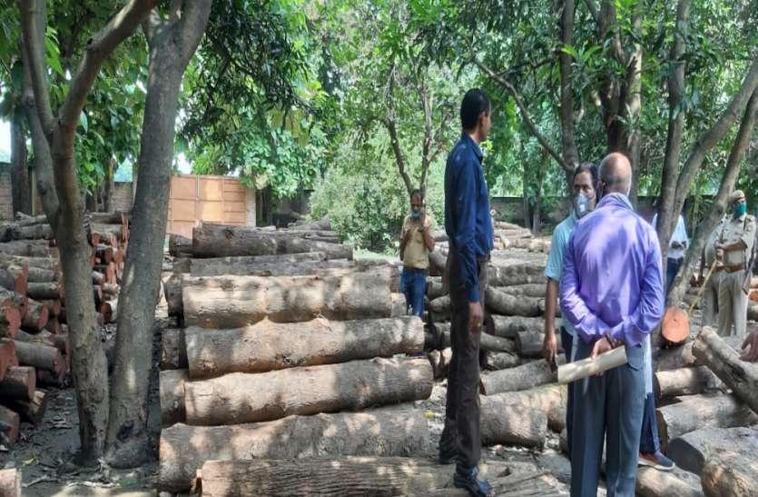 वन विभाग की टीम ने मारा छापा, बरामद हुई सैकड़ों लकड़ियों की बोटी