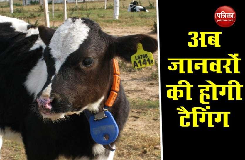 UID- Pashu Aadhaar : अब पशुओं का भी होगा पहचान नंबर, खरीदने-बेचने में होगी आसानी