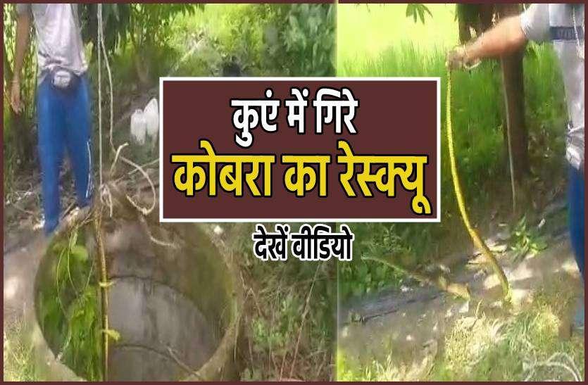 कुएं में फुफकार रहा था कोबरा, सर्प विशेषज्ञ ने बचाई जान, देखें वीडियो