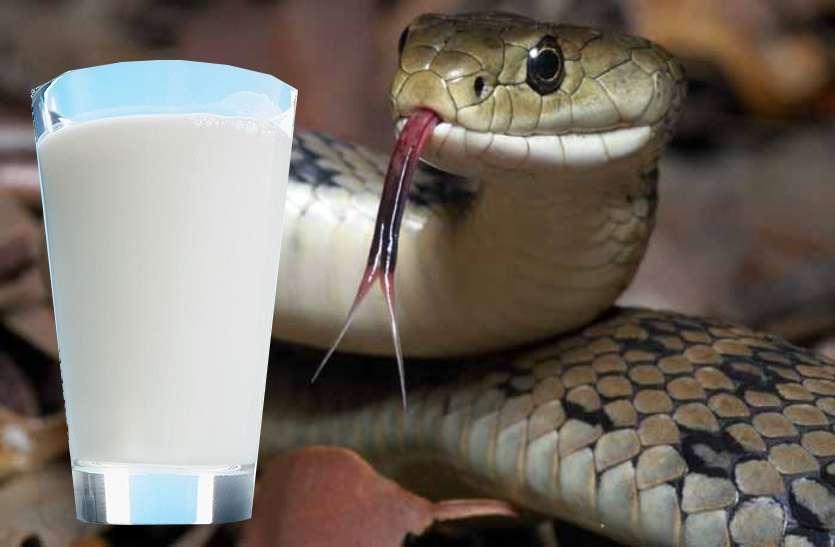 दूध पीते ही तड़प-तड़पकर मर गयीं दो मासूम बहनें, दूध से थोड़ी दूर पर मिला जहरीला सांप